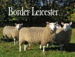 Border Leicester