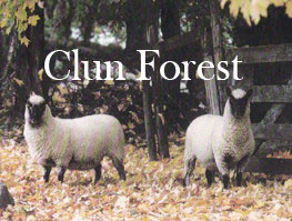 Clun Forest