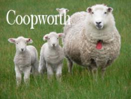 Coopworth