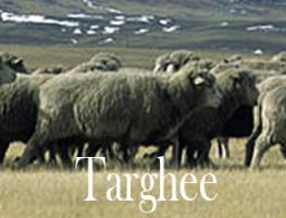 Targhee