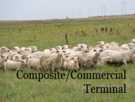Composite/Commercial Terminal